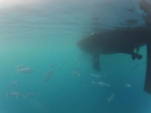 Elan 434 von unten in der Bucht von Cabrera